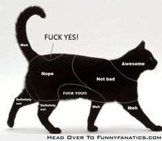 Petting chart for cats- this is accurate