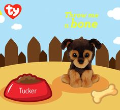 Tucker loves bones and doing tricks just for you!