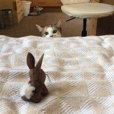 Cookie needs bunny! http://ift.tt/2s0AxKn