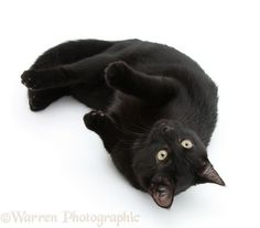 Black male cat, Joey, 6 months old.