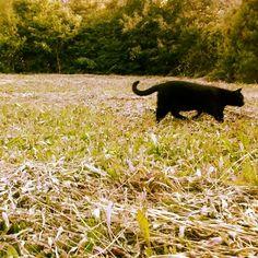 Léna áthalad a horizontomon                  ketcica készítette ezt a képet. Animals, Animales, Animaux, Animal, Animais