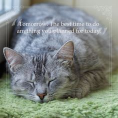 Are you starting your new years resolution tomorrow? Pet Health, Pets, Quotes, Animals, Animals And Pets, Quotations, Animales, Animaux, Quote
