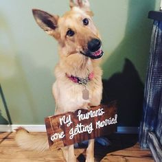 Make a big fun statement with getting your pet to announce your engagement How beautiful is this pup wearing our custom engagement sign? We can make these as big or as small as you need. . . . . . . . #dogsofinstagram #instagoods #doglovers #bridetobe #isaidyes #proposal #engagement #engaged #lovestory #couplegoals #ohwowyes #engagementphotographer #engagementphotography #engagement #engagements #couplesession #couple #love #gettingmarried #goingtothechapel #savethedate #proposal #shesaidyes…