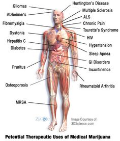 Recent Research on Medical Marijuana - Emerging Clinical Applications For Cannabis & Cannabinoids  A Review of the Recent Scientific Literature, 2000 — 2012