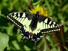 ♥1 2 3 OLIVE♥: papillon