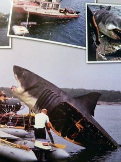 1000+ images about JAWS on Pinterest | The shark, Minimalist movie ...