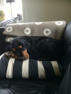 Louis loves the sofa