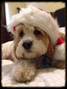 Himes ready for Santa