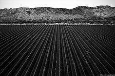 """""""Infinity"""" - Black and White Photography by Lynn Langmade - Farm photograph, field photograph, harvest art, decor, nature wall print"""