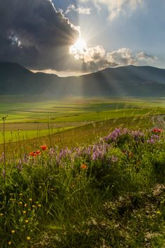 Flowers and play of light at Castelluccio by Hans Kruse