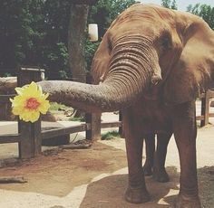 If I ever get an elephant, i am going to teach him to pick you flowers!