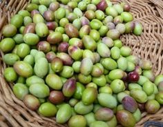"""AmorOlio is a project I began with friends at Villa Campestri, a beautiful resort in Tuscany's Mugello valley, north of Florence. We do six-day """"weeks"""" of olive oil education--tasting, comparing, savoring, working in the kitchen, studying the olive groves and the frantoio where Villa Campestri's olives are pressed into spicy green oil, talking, dreaming, tasting wine and cheese, and generally expanding our horizons. This is our program for October & November 2012."""