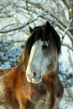 Draft horse soooo handsome!!