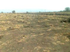 30 Acres Of Land For Sale In Dawa * Land located not too far from the main Aflao road  *Litigation free  *Selling in bulk as in 30 acres  *price is per acre  *Site plan and Indenture provided  *2 min drive from the newly proposed airport  *Acre Measured 200 x 210 feet  *Sited at a very prime location for estate development,agricultural purposes or building schools call +233241501110