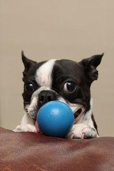 78/365:  Hey derr. Wanna play wif my blue ball?