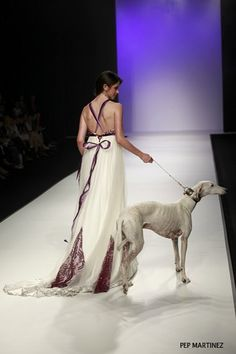 A high fashion statement! #dogs #pets #Greyhounds Facebook.com/sodoggonefunny