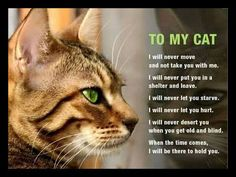 To our beloved cats. Cat Quotes, Animal Quotes, Baby Cats, Cats And Kittens, International Cat Day, Scrapbook Quotes, Anatole France, Pet Day, Crazy Cat Lady