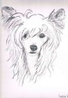 Chinese Crested Powderpuff drawing in charcoal - Made by Sarah Soete (in 2009)