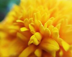 This beautiful photo of a marigold flower is only $3.50 on Etsy!