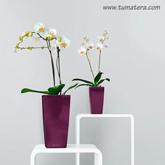 https://tumatera.us/collections/table-planters/products/maxi-cubi