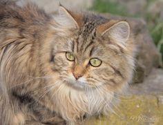 Sinthari ~ Lady Amalthea von Sinthari
