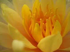 Lovely, lovely water lilly ...  by Churaipon C. Klaijumlang