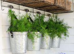 galvanized buckets with ferns hanging from a wire shelf.  The perfect accent for our farmhouse porch.