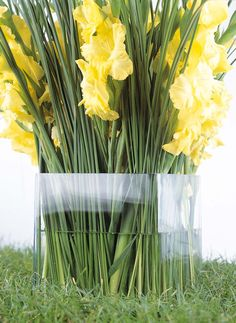 Yellow gladiolus Darjeeling Tea, Grill Party, Daffodils, Floral Arrangements, Beautiful Flowers, Yellow, Garden, Bouquets, Color