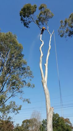 While these are the distinct benefits of having trees on your property, they can sometimes cause problems as well and it becomes necessary to cut them and remove them from your property. This job is best handled by experts like us. If you want to avail our Tree Removal St Helens Park then you can call us in 452585258.
