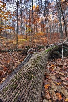 Fell, Hardin Ridge Recreation Area, Hoosier National Forest - David Plumier