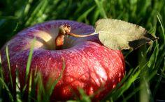 fruit red apple fruit wallpaper