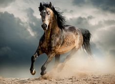 Imagen de http://static.batanga.com/sites/default/files/curiosidades.batanga.com/files/El-caballo-mas-grande-del-mundo_0.jpg.