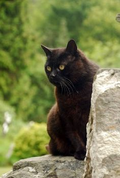 Cat who lives at the Glendalough Site