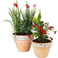 Falmouth Glazed Plant Pot - 45cm