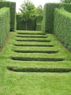GARDEN - Art of Landscape Hedges and Grass Stairs in Paul Bangay's Garden Raising Bilingual Children Garden Hedges, Topiary Garden, Terrace Garden, Garden Paths, Garden Art, Garden Landscaping, Garden Design, Garden Grass, Landscaping Ideas