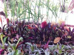 Estas son plantas de nuestro nuevo germinador, que ha crecido mucho