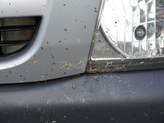 How to remove bug splats, and which products to use