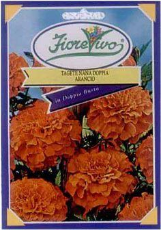 Tagete Nana Doppia Arancio - Semilandia