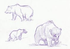 Jampix: Bear sketches   placement of head and shoulders in far right