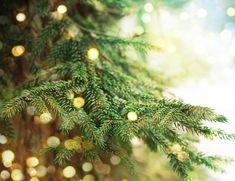 Marta Malheiro, Author at Revista Jardins - Página 3 de 5 Holiday Market, Christmas Tree, Christmas Ornaments, Santa, Holiday Decor, Flowers, Holidays, Mom, Children