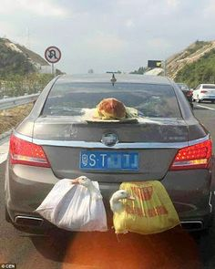 """""""O Grito do Bicho"""": Chinês transporta uma galinha e dois patos vivos c..."""