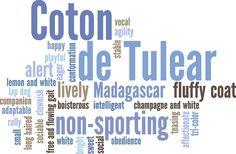 Coton de Tulear by Wry Toast Designs, via Flickr.