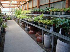 danger garden: October is Support Your Independent Nursery Month! Let's visit Garden Fever...