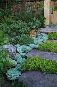 Succulent Rock Garden, Succulent Landscaping, Front Yard Landscaping, Succulents Garden, Landscaping Ideas, Succulent Plants, Landscaping Borders, Succulent Species, Inexpensive Landscaping