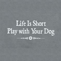 Play with your dog.