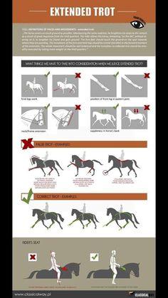 Horse Behavior, Horse Riding Tips, Horse Tips, Horse Exercises, Horse Anatomy, Horse Facts, Dressage Horses, Draft Horses, Horse Training