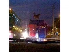Trasladan a perro sobre techo de mototaxi con carga excesiva