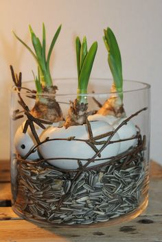 Use empty eggshells to craft for Easter … 11 nice decoration ideas … - Ostern Rama Seca, Deco Floral, Egg Shells, Easter Crafts, Holidays And Events, Happy Easter, Easter Eggs, Floral Arrangements, Diy And Crafts