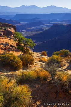 On A Clear Day... layered buttes extending to the La Sal Mountains are seen from Canyonlands National Park, Utah/Arizona