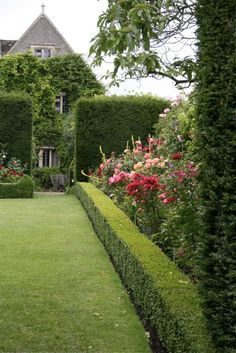 Formal English garden evergreen walls, closely trimmed boxwood hedges framing beds of colorful roses & perennials.